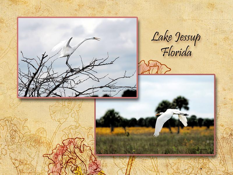 LakeJessup-page1.jpg