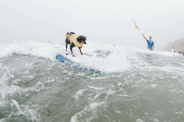 Surf_Dog_Surfathon_2018