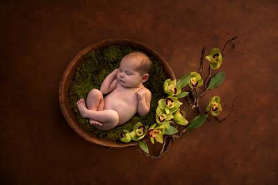 Vanessa-Newborn