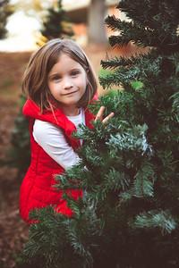 Tali's Christmas Tree Farm