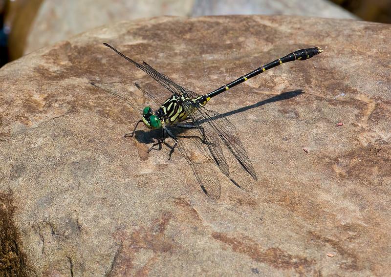 Male, Upper Lisle, Broome County, NY
