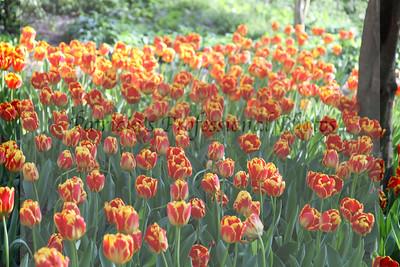April Flowers 2013