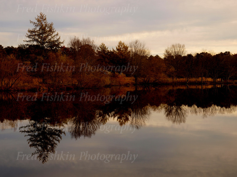 turkey swamp autumn.jpg
