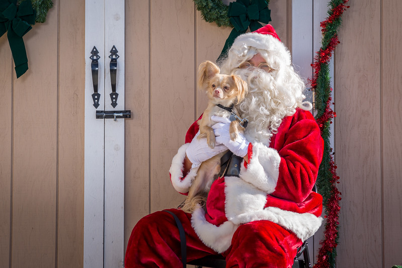 Pet Pictures With Santa-69.jpg