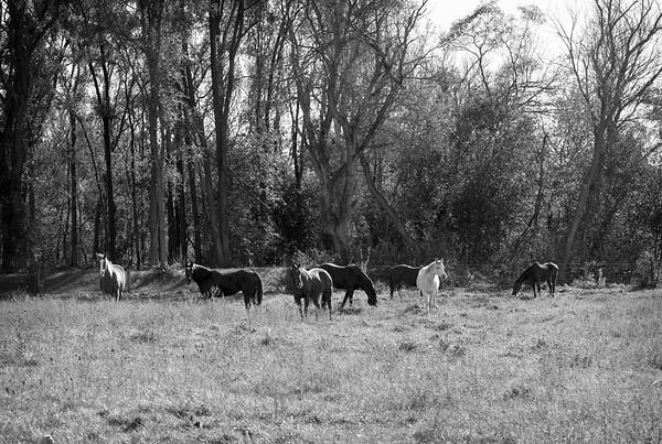 Horses of Wayne