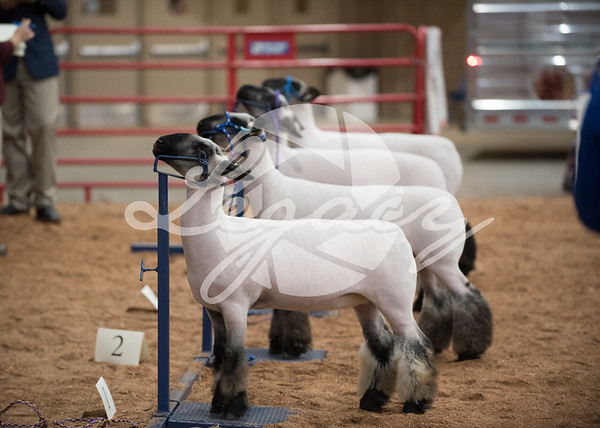 Livestock Judging Contests