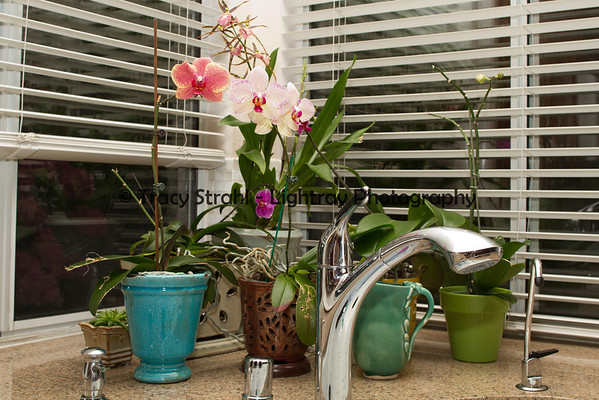 Garden plants 6-13-2012