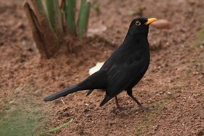Moroccan Birds 2015