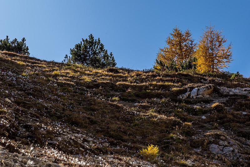 Auf dem Weg vom Ofenpass zur Alp Mora: Prachtvolle Herbstfarben