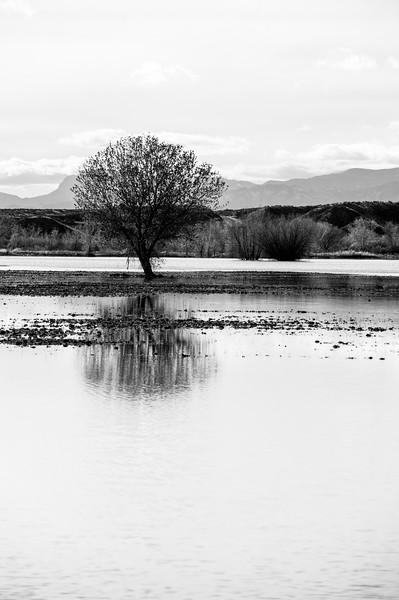 20091212 Bosque del Apache 052.jpg