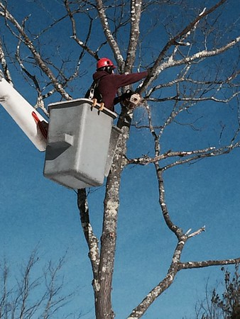 Tree Work at Windward Pointe