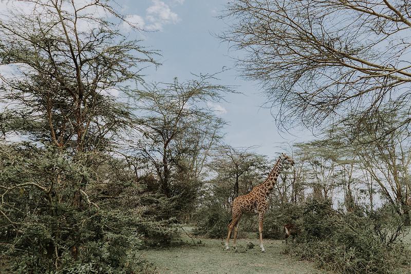 Tu-Nguyen-Destination-Wedding-Photographer-Kenya-Masai-Mara-Elopement-Doris-Sam-6.jpg
