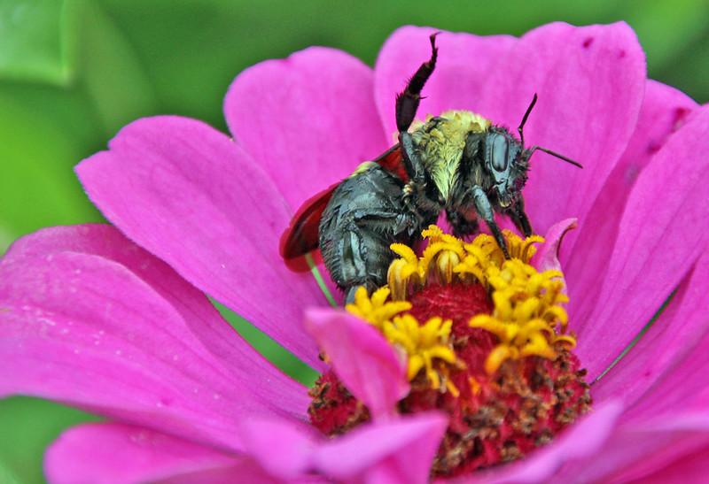 Bumble bee 54