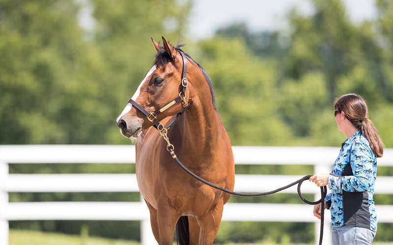 Whirlwind Poppy at New Vocations 6.28.18.