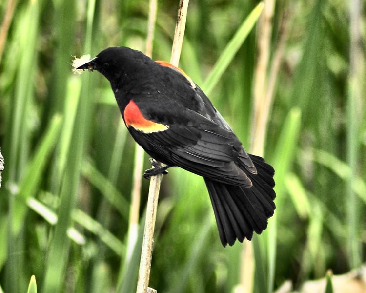 Bird  09-004.jpg