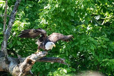 June 2020 - Birding