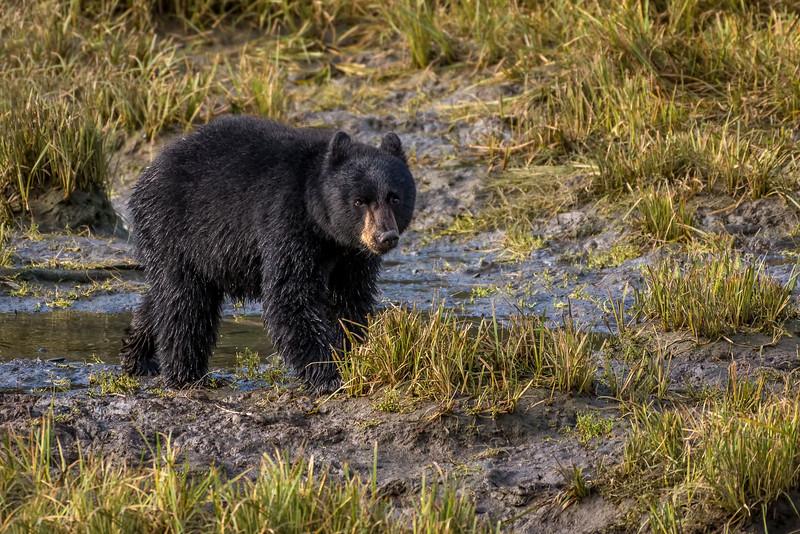 DSC 9634 black bear cub.jpg