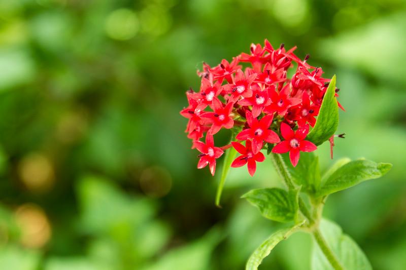 nanaples_botanical_garden_0015-LR.jpg