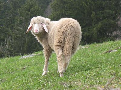 Garmisch '08