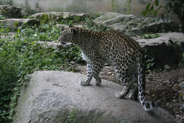 Zoo Mulhouse 2005