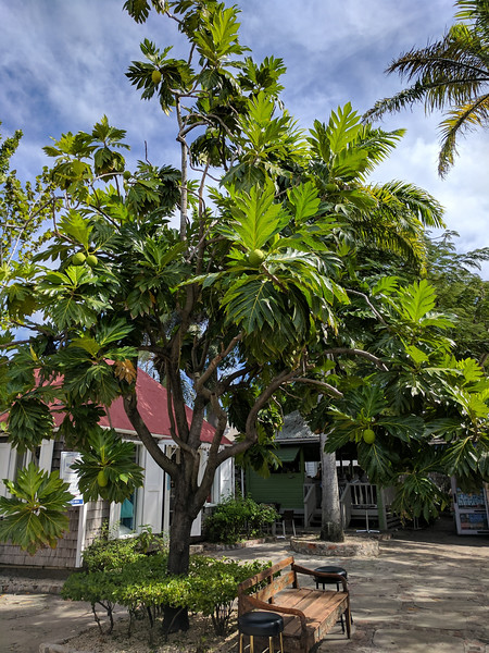 2017JWR-Caribbean-218.jpg
