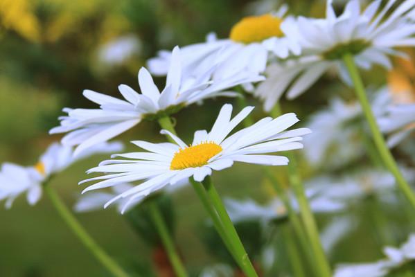 Oregon's Wild Harvest Flowers