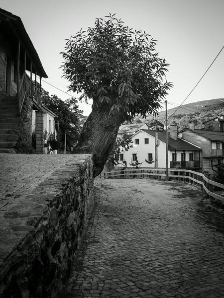 Montesinho