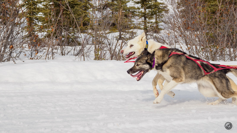 20190325_Blaire_and_Liz_Mushing_34.jpg