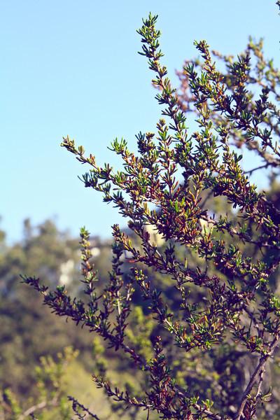 Week 8 Buchanon Canyon 15.jpg