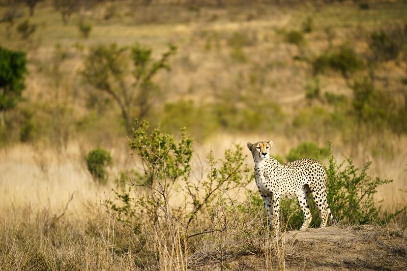 LeopardHills-20171022-0275.jpg