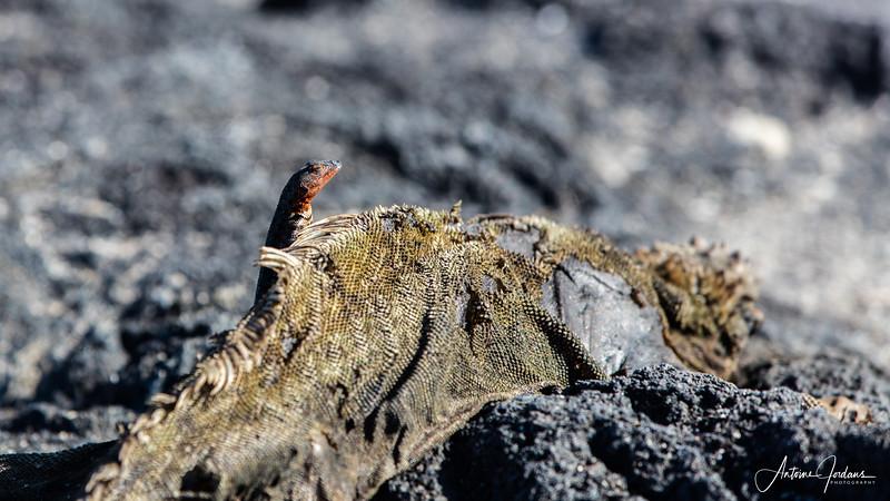 2016 Galapogos Islands
