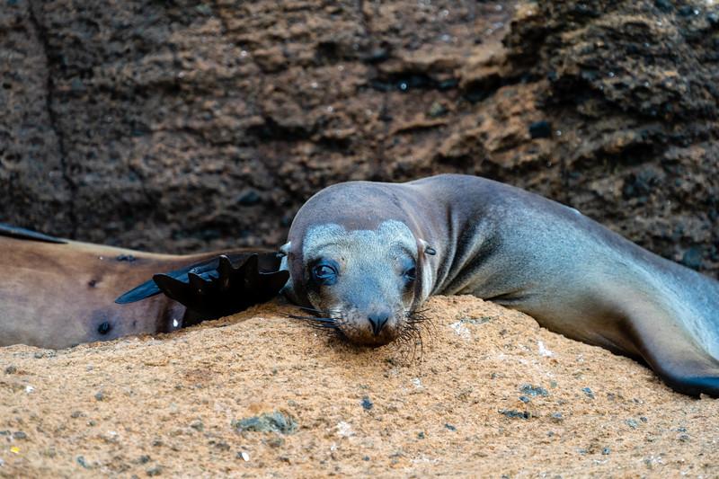 Galapagos-3782.jpg