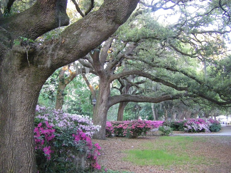 Beautiful Savannah, Georgia, is one of our favorite USA vacation spots. Need more boomer travel ideas? Click through for trip inspiration. #Savannah #Georgia #boomertravel