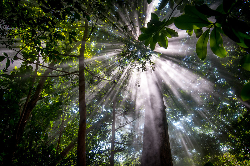 Sunbeams in Steam in Rincon Volcano National Park, Costa Rica