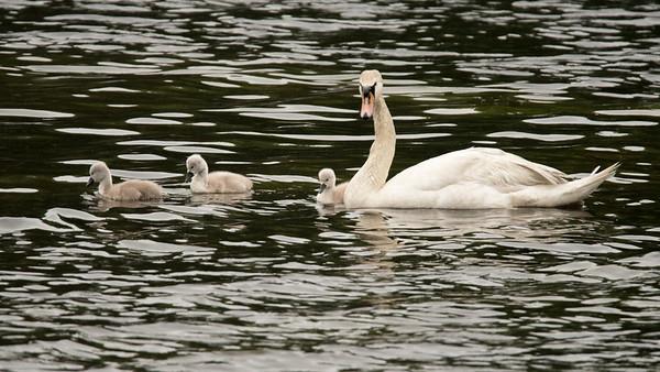 Farrar Pond - Lincoln MA