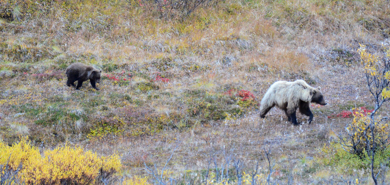 Alaska Fall 2013 - 205.jpg