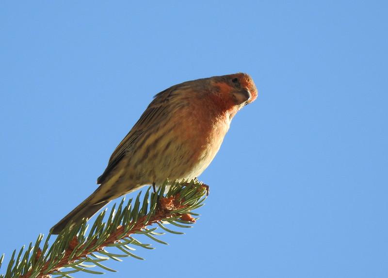 birds (109).JPG