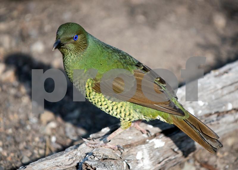 birds 17.jpg