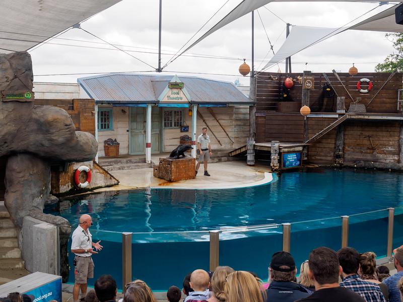 Taronga Zoo seal show