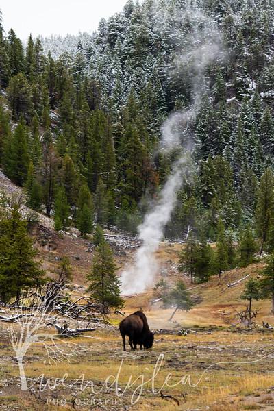 wlc Yellowstone 0919 4412019.jpg