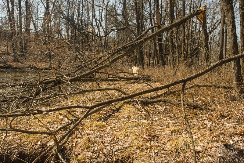 storm damage to locusts