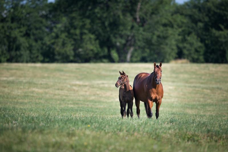 15_0615_AgaKhanmare&foal_ww-1064.jpg