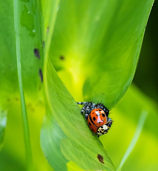 spider_with_ladybug.jpg