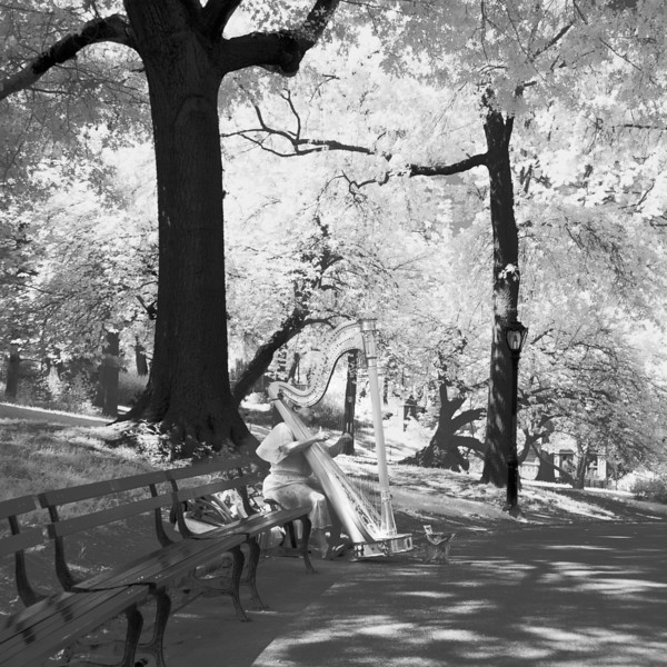 infrared-harpist-central-park.jpg