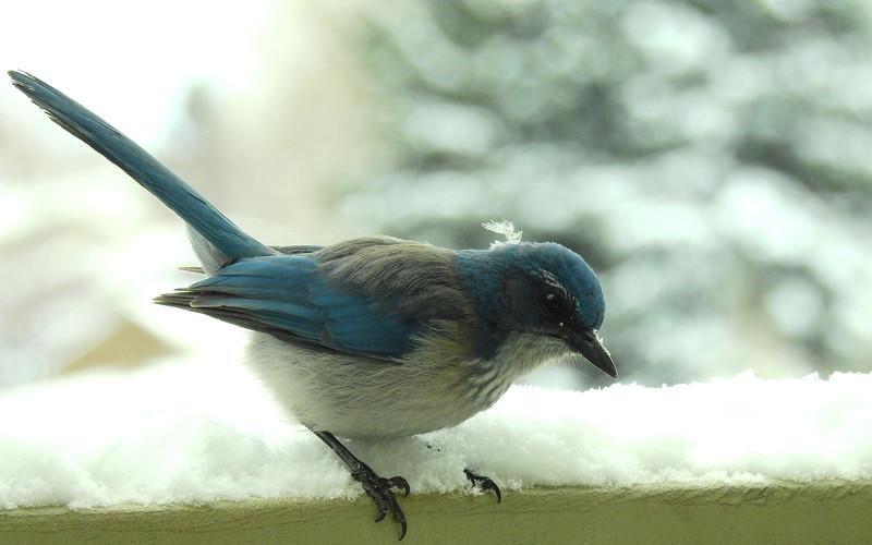 birds (231).JPG