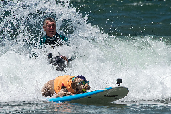 Surf Dog Competition 8/10/19