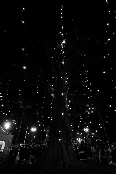 Holiday Tree Lighting Ceremony 2016