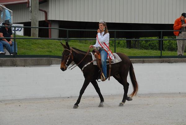 2012 Gaited Mule