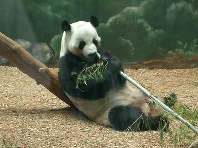06-21 - Zoo Atlanta - Atlanta, GA