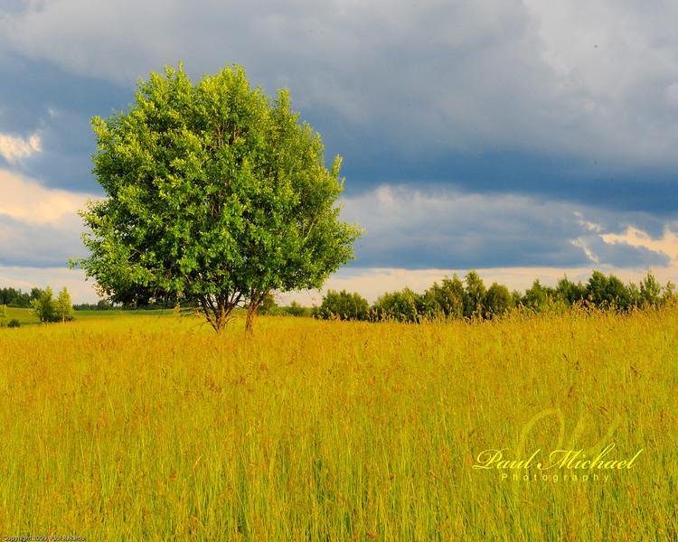 Tree in grass!